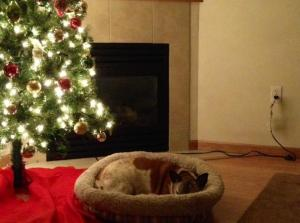 My dog's bed starts off next to the wall, but she moves it under the Xmas tree.